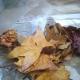 agroarte de otoño con hojas secas